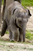 Baby Beko the Elephant enjoys vacation