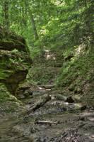 Trail #2 - Ravine (IMG_7996) by Jeff VanDyke