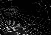 Spider Web Isolated on black