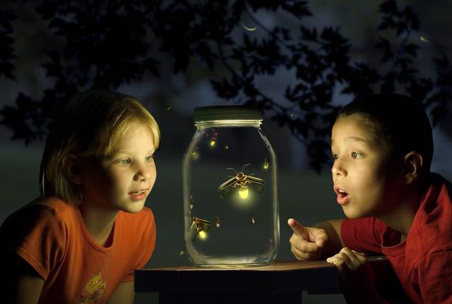 Firefly Catchers