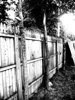 Trees and Fence