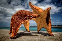 Dancing Starfish