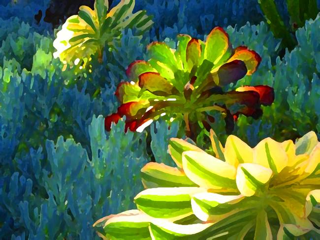Succulents Backlit on Blue 2