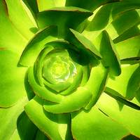 Succulent Clode-Up Square 3