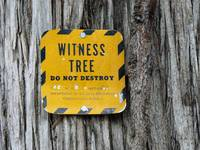 Witness Tree Protection Plan