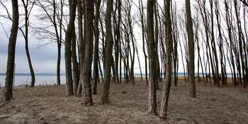 Trees at Shore