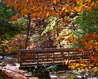 Bridge at Ricketts Glen