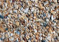 Trove of Shells on Coquina Beach