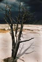 Tree in the Travertine