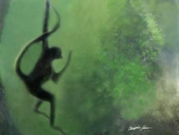 Spider Monkey in Motion 1