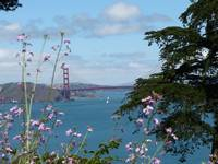 Golden Gate Tower with Flowers
