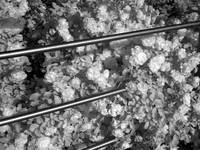 Flowers and metal rods