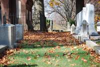 Autumn leaves in a Grave yard