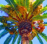 looking up at Palm Tree