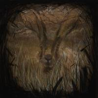 The Field Hare