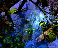 Nocturnal Rain Forest