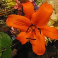 Floral by Patricia Schnepf