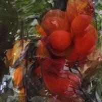 Orange Tree by Patricia Schnepf