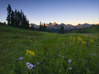 Sunrise Meadow