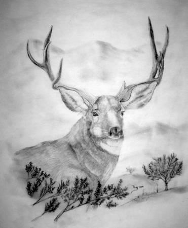 Deer Drawing 7 - Charcoal Drawing of Mule Deer Buck by Russ Smith