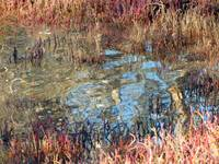 Wetlands Abstract