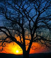 Another sunset, Another tree