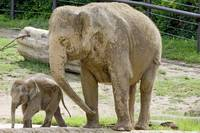 Baby Beco get a helping trunk from Momma Phoebe
