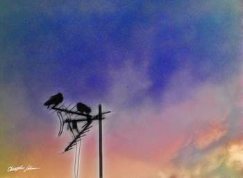 Two Birds at Sunset