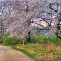 Magnolia tree after a rain Art Prints & Posters by jforman