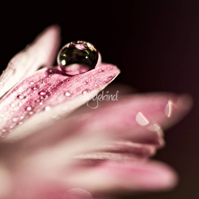 Beauty Within A Drop