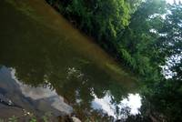 wissahickon reflections