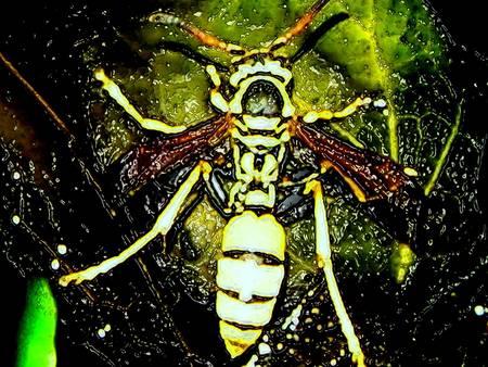 wasp creepy
