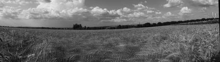 Cornfield in the wind BW