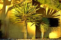PL_BB_Palm Shadows_0882_19x13c