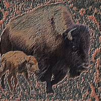 Bison and young by Gary Miles
