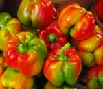 Red-Yellow-Green Peppers