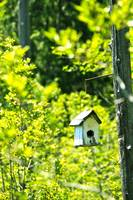 Birdhouse At The Bog