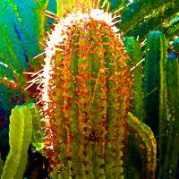 """Backlit Cactus"" by AmyVangsgard"
