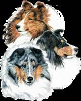 Shetland Sheepdog Shelties Group