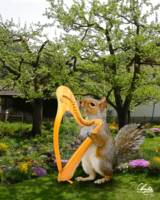 Squirrel-Harp