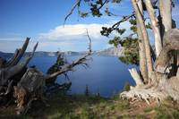 Crater Lake with Tree Trunks