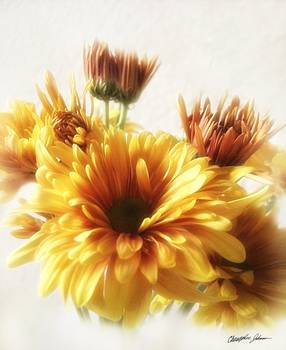 Gold and Brown Chrysanthemum 1