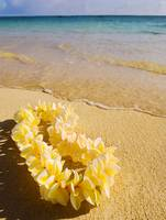 Plumeria lei on the seashore
