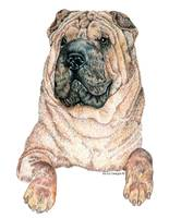 Chinese Shar-Pei Dog