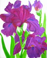 Irises-vanishing beauty