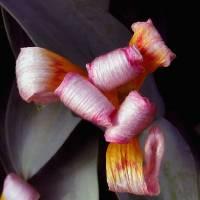 *Party Flower by Patricia Schnepf
