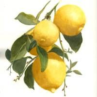 """Lemons"" by catspaw"