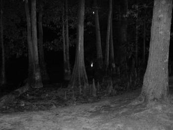 Woods At Night Woods At Night Vi By Stephy Wang Momper
