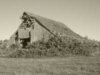 Abandoned barn2 BW