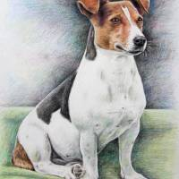 """Jack-Russell-Terrier"" by ArtsandDogs"